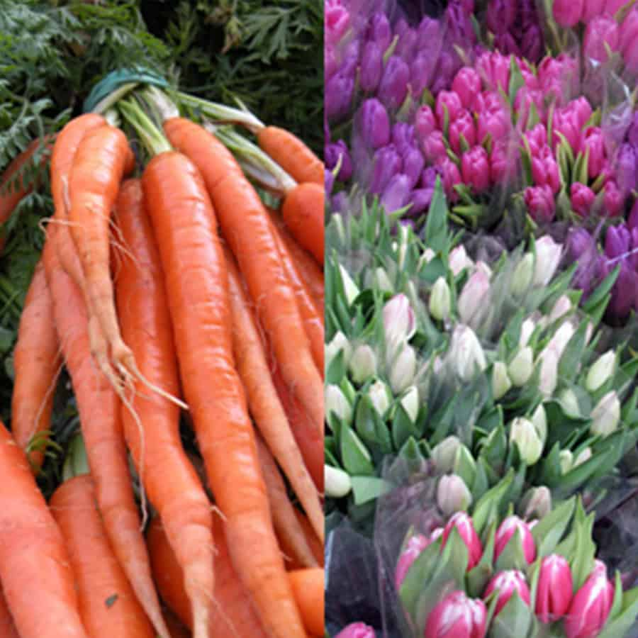 picture of carrots and flowers