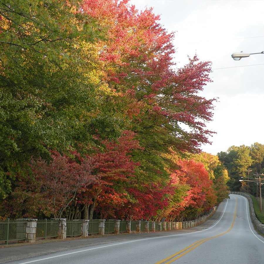 Photo of Fall road