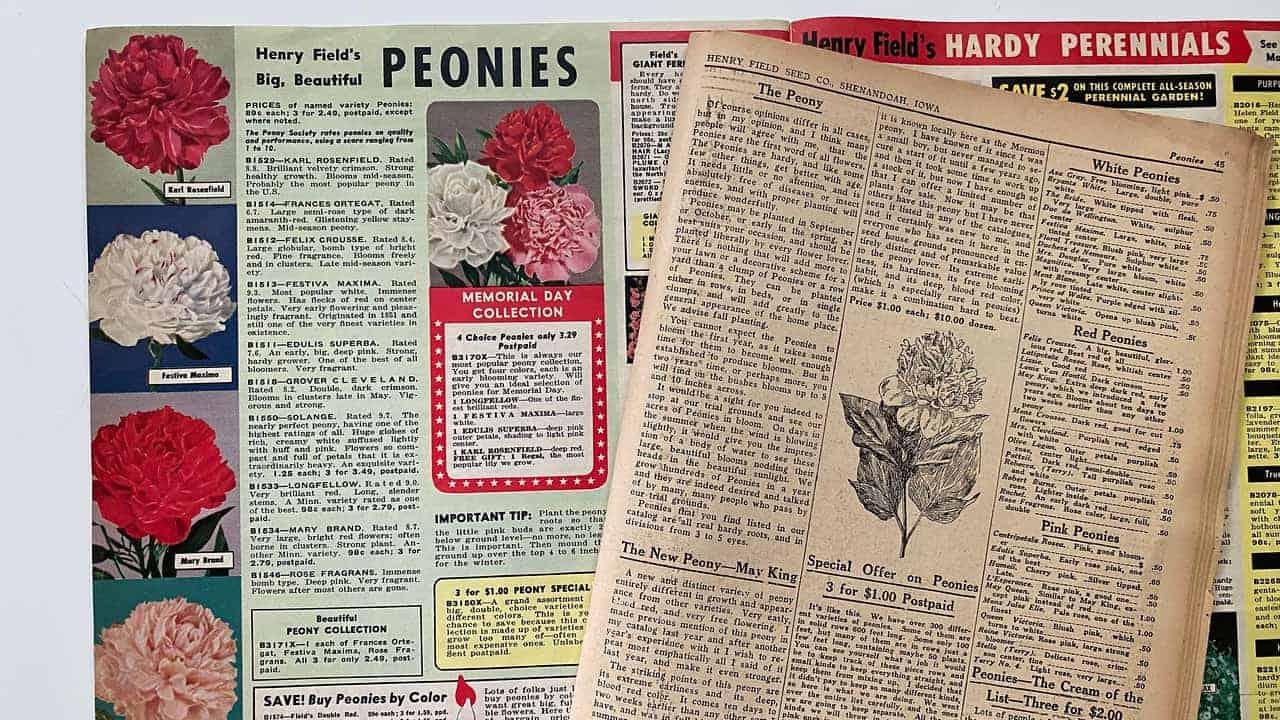 Peonies Catalog