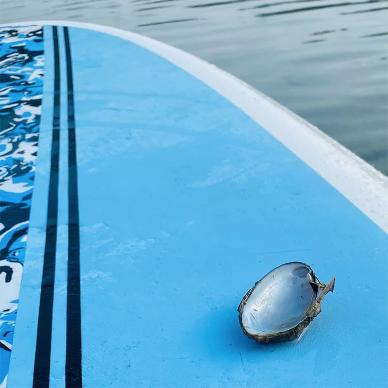 Oyster Shell on Kayak